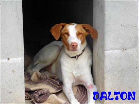 Dalton2