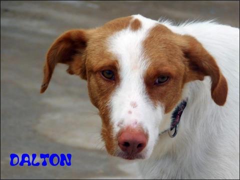 Dalton4