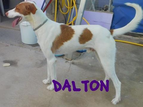 dalton8