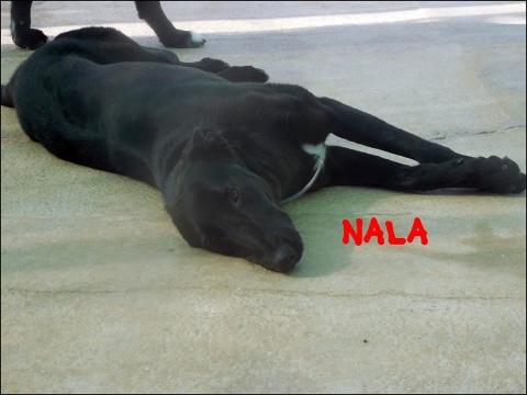 nala1