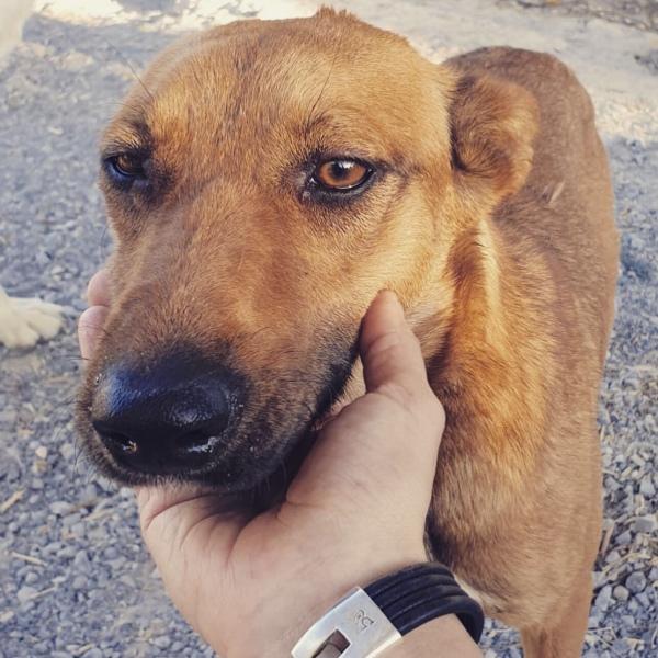 20-06-2019-alma-perra-adopcion-porpatas-granada-8