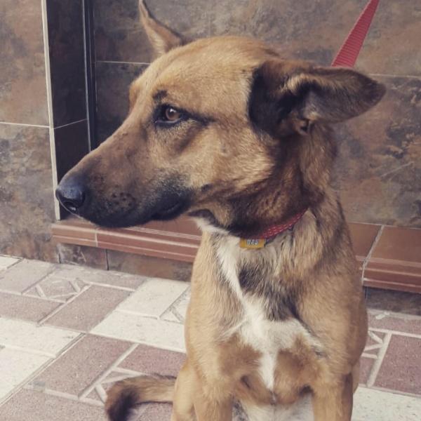 20-06-2019-alma-perra-adopcion-porpatas-granada-9