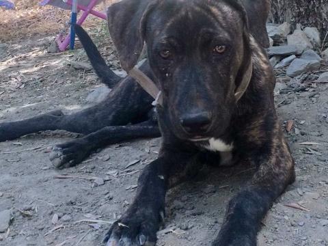 Bogo perro adopcion porpatas (4)