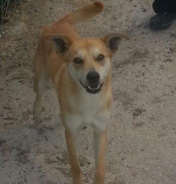 BOSTON fotos nuevas perro asociacion porpatas granada adopcion (2)