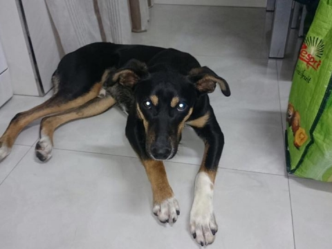 Bruno (11)