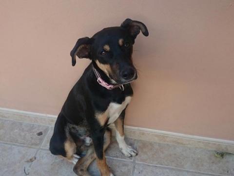 Bruno (5)