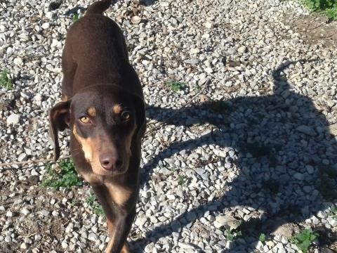 Canela perra adopcion perrera urgente enero2018 (4)