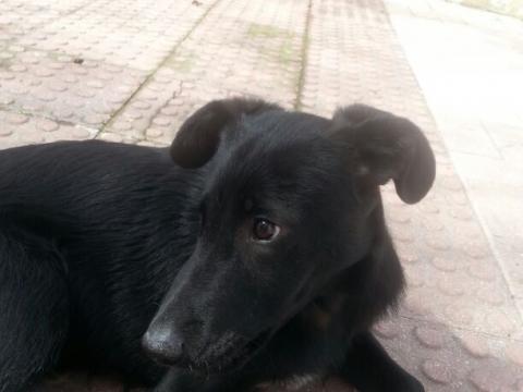 13-03-2018 curro perro adopcion porpatas (1)