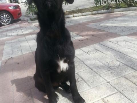 13-03-2018 curro perro adopcion porpatas (3)