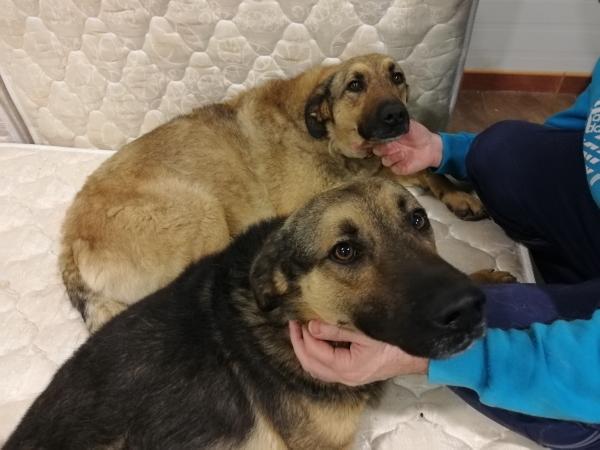 18-04-2019-Dama-perra-adopcion-porpatas-2