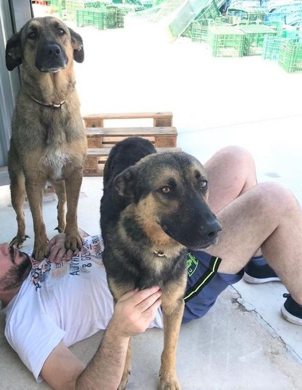 20-08-2019-Lobito-perro-adopcion-porpatas-1