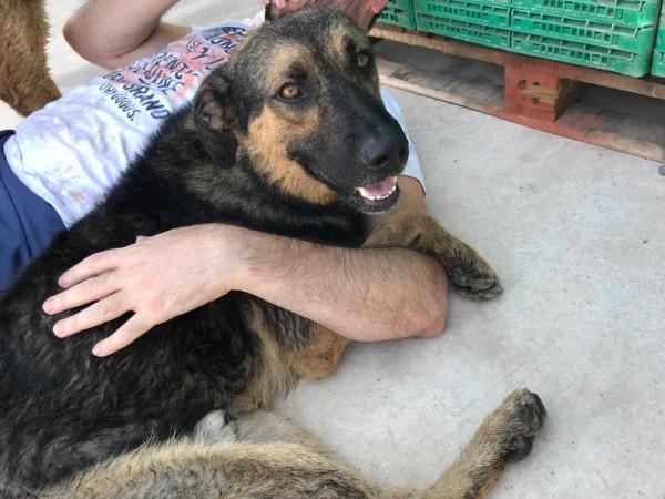 20-08-2019-Lobito-perro-adopcion-porpatas-3