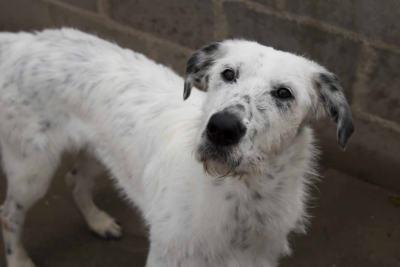 adopta-perro-eros-1024x683