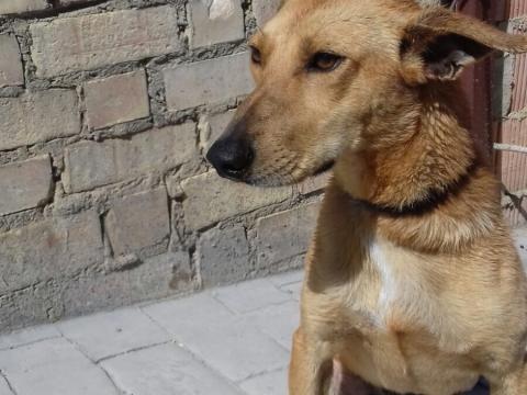 Dumbo perro adopcion por patas (2)