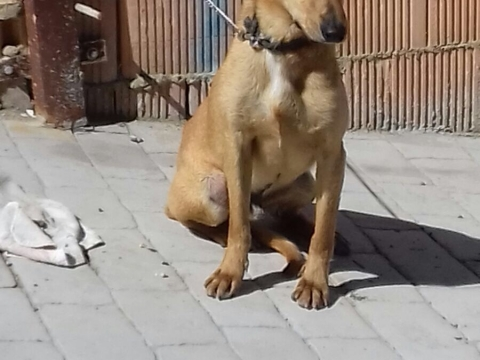 Dumbo perro adopcion por patas (4)