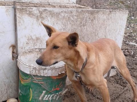 Dumbo perro en adopcion Sevilla (1)