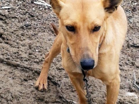 Dumbo perro en adopcion Sevilla (2)
