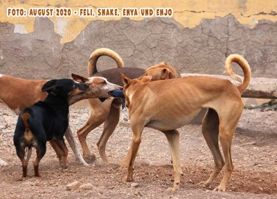 Feli-Enya-Enjo-Snake-06-08-20_2_b1