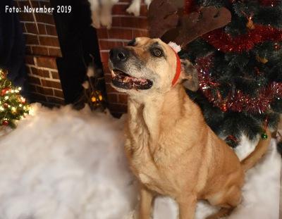 Galla_Weihnachten_18-11-19_4-b1