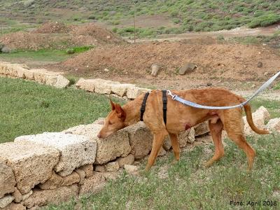 Ginger-06-04-18-3-b1