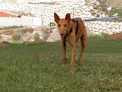 Ginger-06-04-18-6-b1