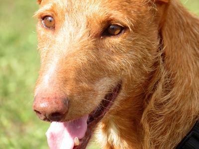 Ginger-06-04-18-9-b