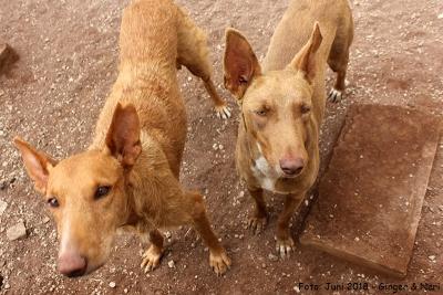 Neri-Ginger-30-06-18-6-b1
