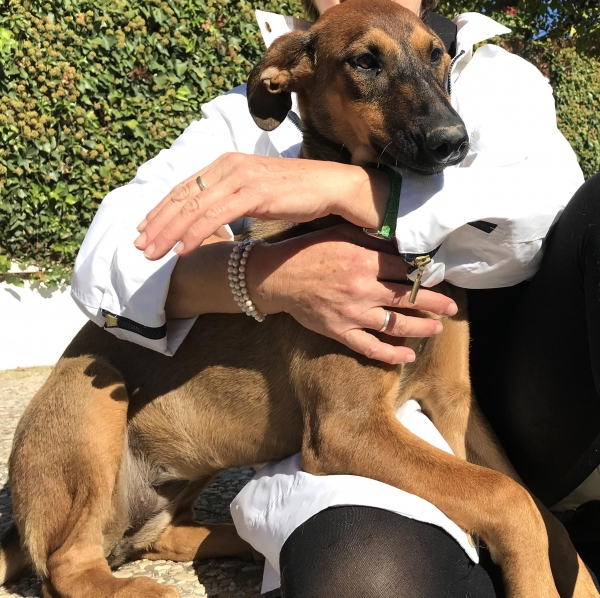 04-11-2018 Khalessi perra adopcion cachorra granada (7)