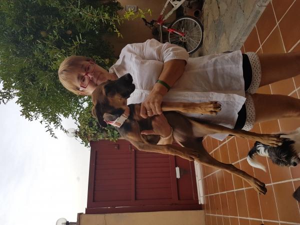 Khalessi perra adopción Porpatas granada sept2018 (1)