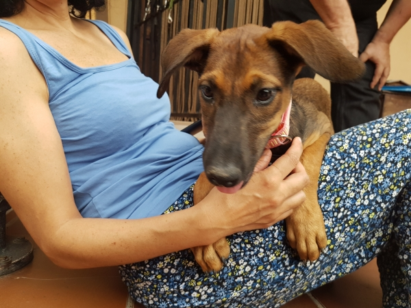 Khalessi perra adopción Porpatas granada sept2018 (2)