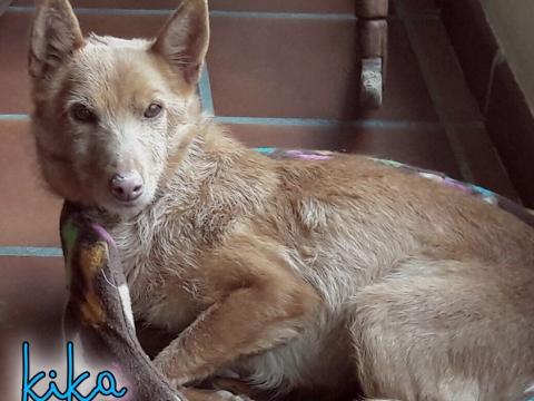 Kika perra adopcion porpatas (5)