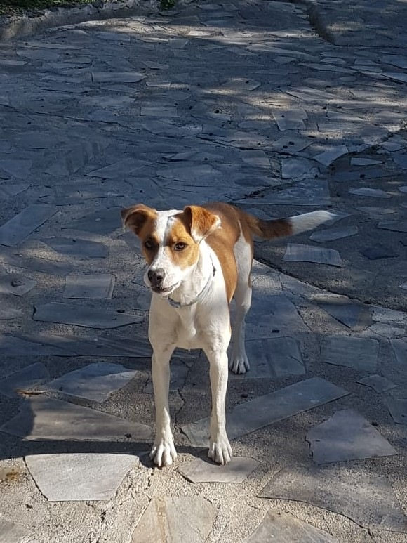 08-12-2019-Lara-adopcion-porpatas-perro-1