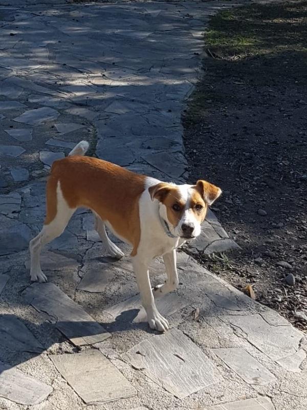 08-12-2019-Lara-adopcion-porpatas-perro-2