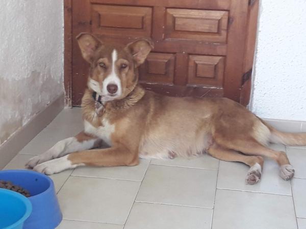 Layka-perra-adopcion-porpatas-granada-1