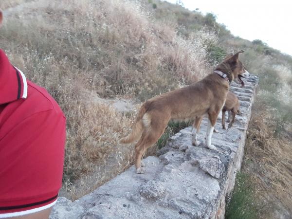 Layka-perra-adopcion-porpatas-granada-2