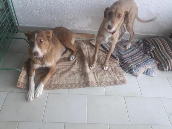 Layka-perra-adopcion-porpatas-granada-3