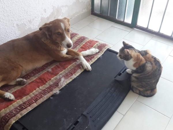 Layka-perra-adopcion-porpatas-granada-4