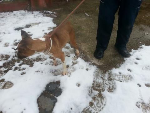 Lena rescatada de la perrera perra adopcion porpatas granada feb2018 (10)