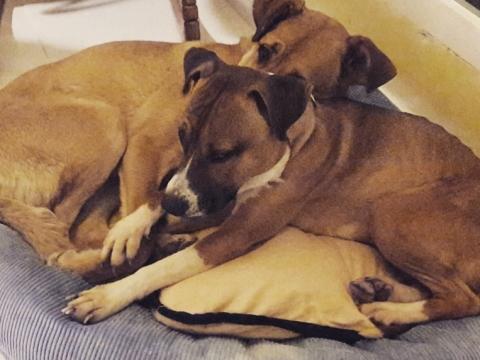 Lena rescatada de la perrera perra adopcion porpatas granada feb2018 (13)