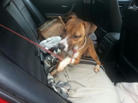 Lena rescatada de la perrera perra adopcion porpatas granada feb2018 (4)