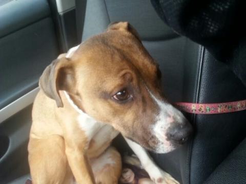 Lena rescatada de la perrera perra adopcion porpatas granada feb2018 (5)