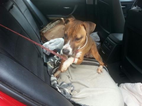 Lena rescatada de la perrera perra adopcion porpatas granada feb2018 (6)