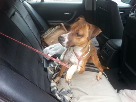 Lena rescatada de la perrera perra adopcion porpatas granada feb2018 (7)