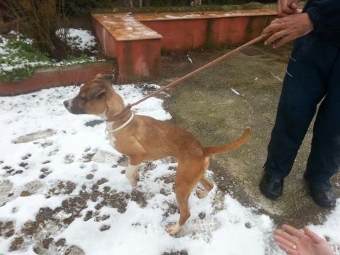 Lena rescatada de la perrera perra adopcion porpatas granada feb2018 (8)