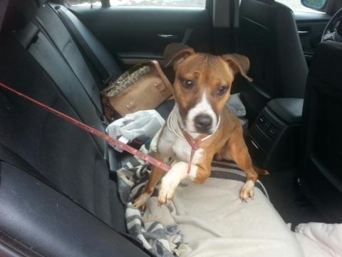 Lena rescatada de la perrera perra adopcion porpatas granada feb2018 (9)
