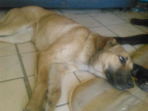 Lisa perra adopcion granada urgente (5)