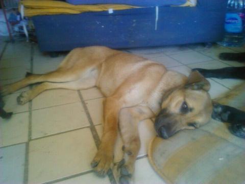 Lisa perra adopcion granada urgente (6)