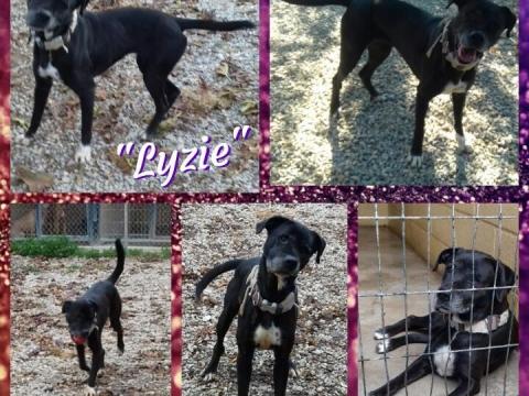 Lizie perrera urgente (3)