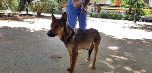 Loba-Perra-adopcion-porpatas-3