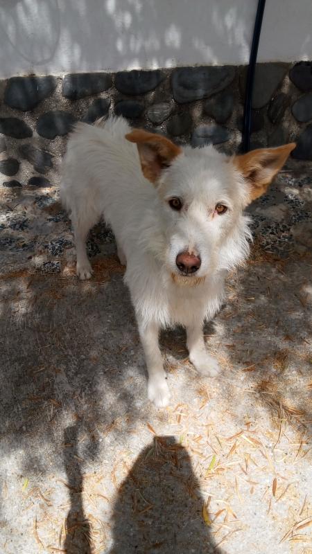 Loki perro adopcion porpatas granada (1)
